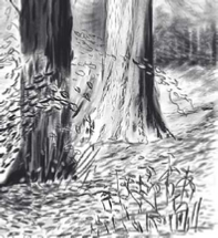 iPad art landscape, autumn, iPad drawing 2013, black and white, iPad art for sale