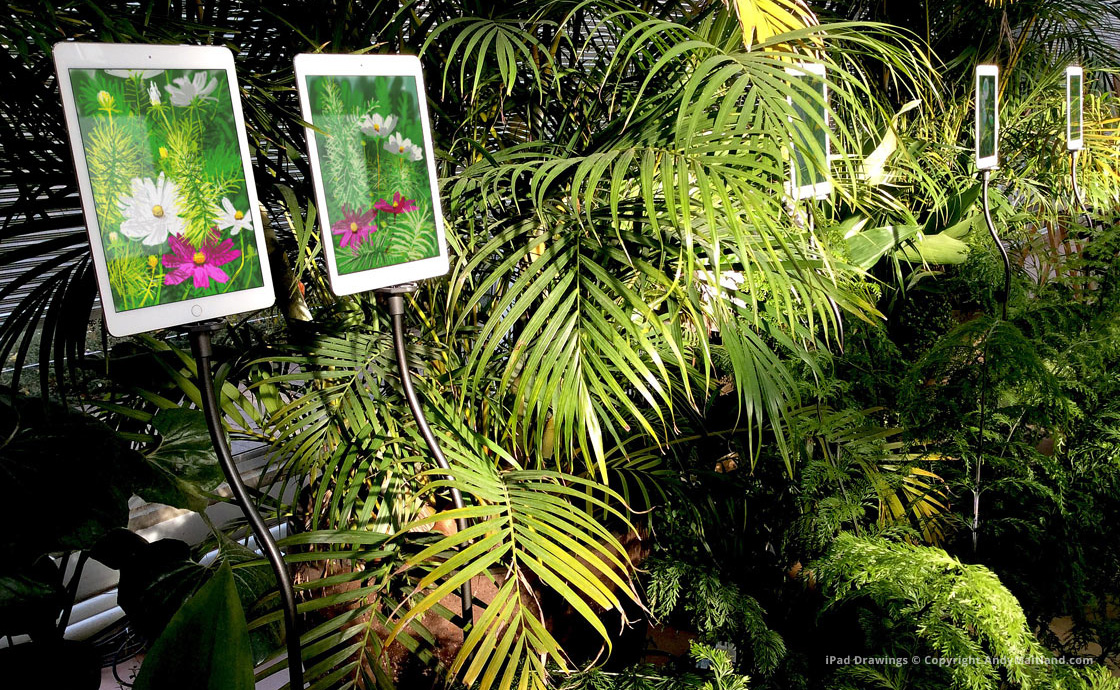 Andy Maitland, The Digital Garden 2019, An experience of animated iPad drawings, 5-20 November, The Royal Horticultural Society Garden Wisley, UK