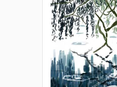 ipad-drawings-for-sale-andy-maitland-willow-in-the-rain-print-large-01